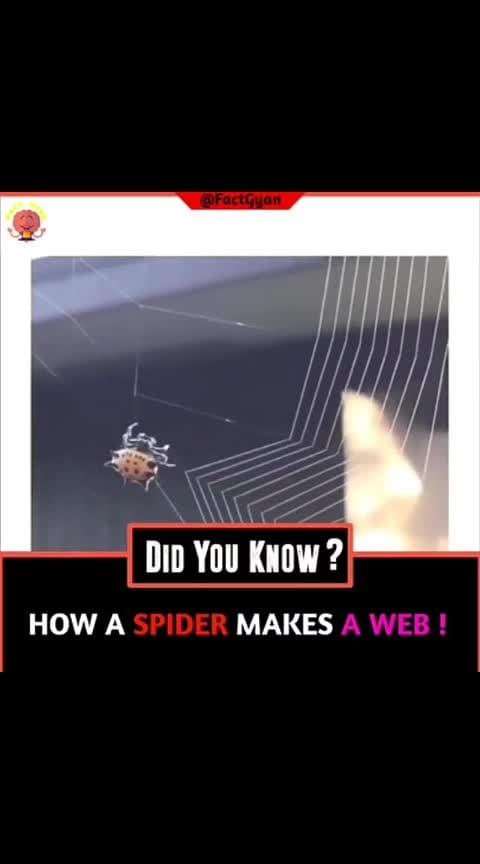 #how #spider #make a #web