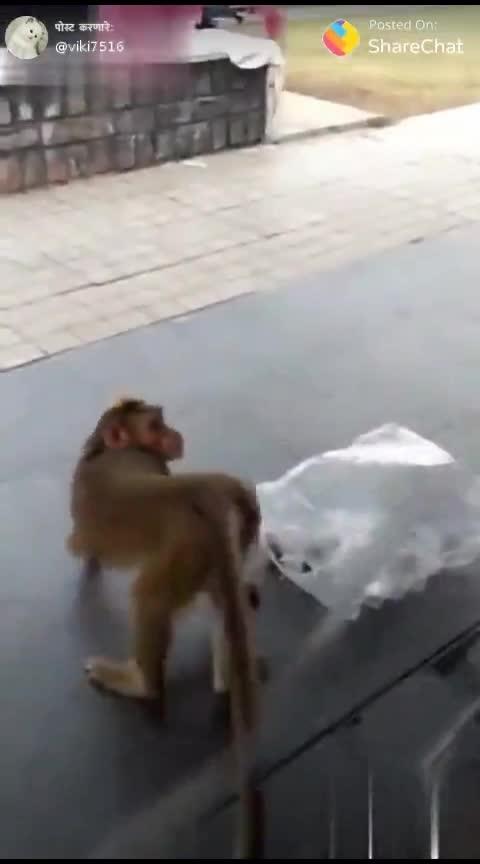 monkey is irritating the dog.....😂😂😂😂😂😂😂😂😂😂😂😂😂😂😂#monkey #dog #comedy #roposo-comedy #roposo-funny-comedy #roposo-good-comedy #funny #roposo-funny #haha-funny #fun #roposo-fun #blablablabla #foreigners
