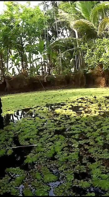 #underwater #plants