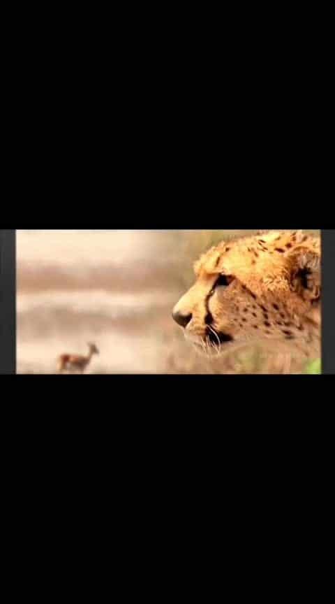 #yamadonga  #ntrfans  #jrntr-  #youngtigerntr  #scene  #tigers  #jaintr #best-intro #cheetah #ssrajamouli #bestscene