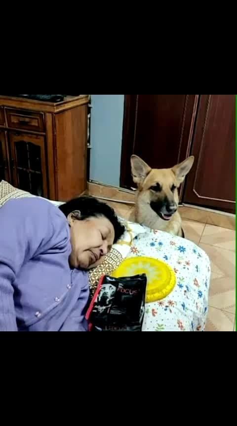 #animalslover #loveanimals #doglover #mysweetdog#mysweetlove #🐕💞💕✌️👌👍🙏