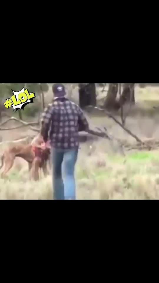 Bichara #kangaroo 🦘 #laughingoutloud #weeklyhighlights