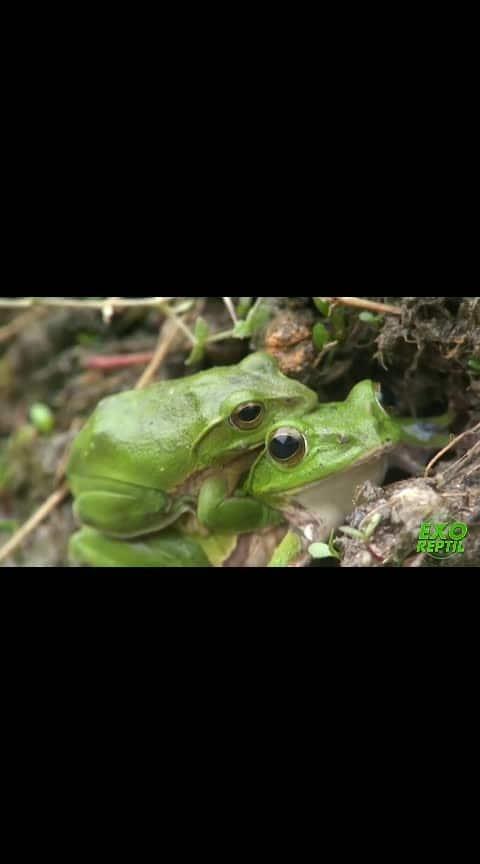 #frog-growthing-life
