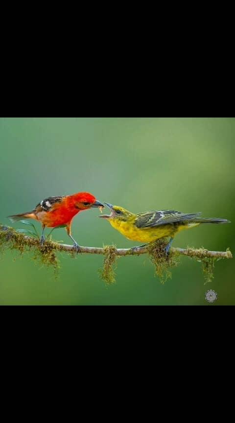 #caputred #lovebirds #photography