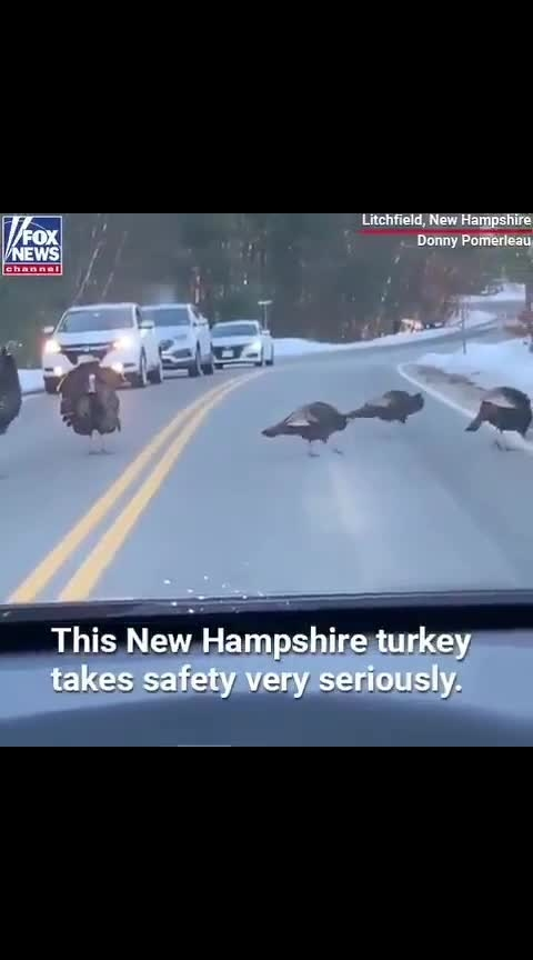 Turkeys Maintaining the road safety