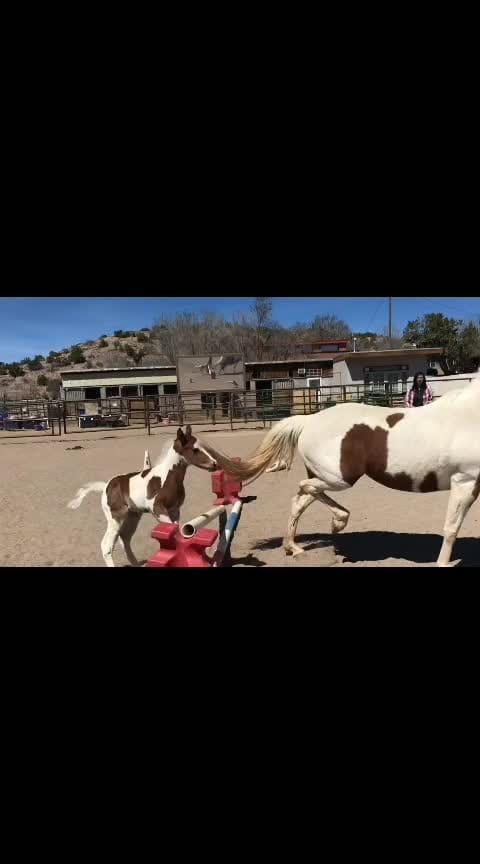 #horsebraid  #training  ,😮😮😮😮😮😮😮😮