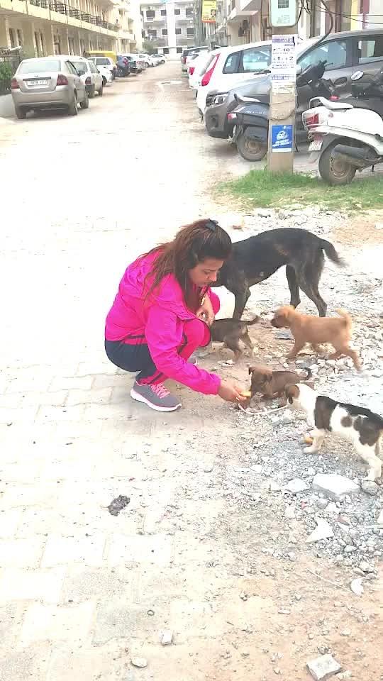 Love animals ❤️❤️