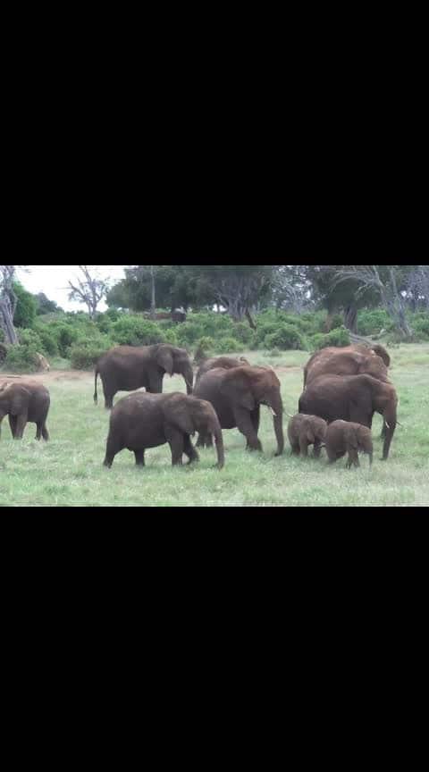 elephant kids #nature #nature_lovers #naturegram #ropo-nature-lover #naturegeography #natureslove #naturephotographer #naturesbeauty