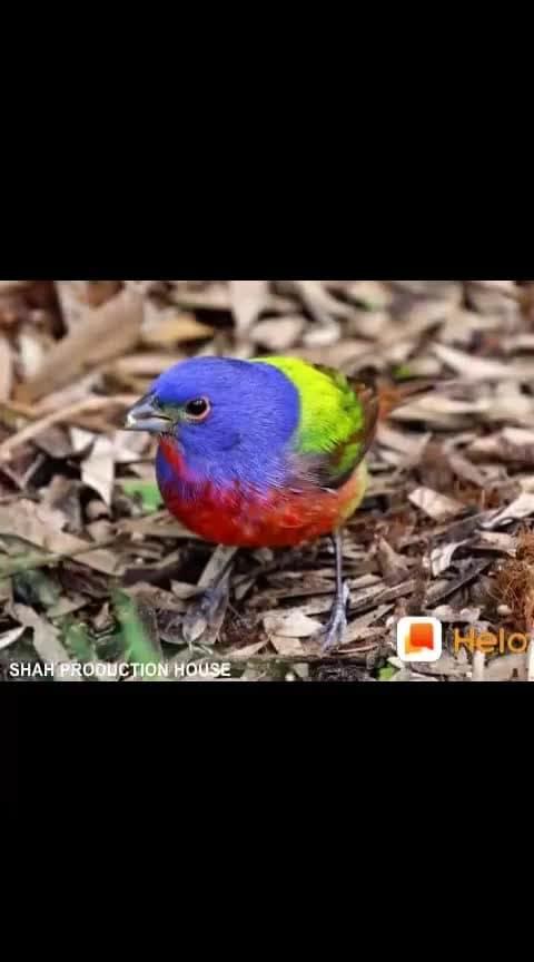 Water-Water Birds
