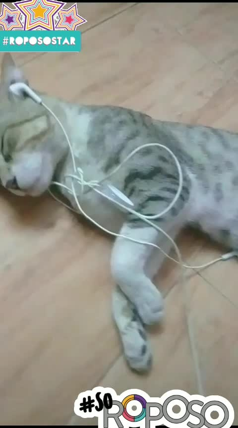 ##haha-tv ..#roposo-food..#roposogoodnight ...##Nicecat...###nice_acting ...Lovely Cat ...##Cat Sleeping In Headset Njoy..&&