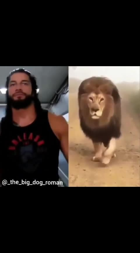 #thelion #roman_reigns #wwe #superstar #fighter #hero #wrestler #usa #indian #rizwanfam