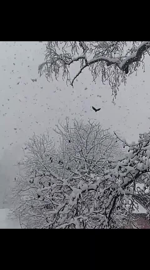 #kashmir #very-beautiful #snowing #snow #tbt #winter