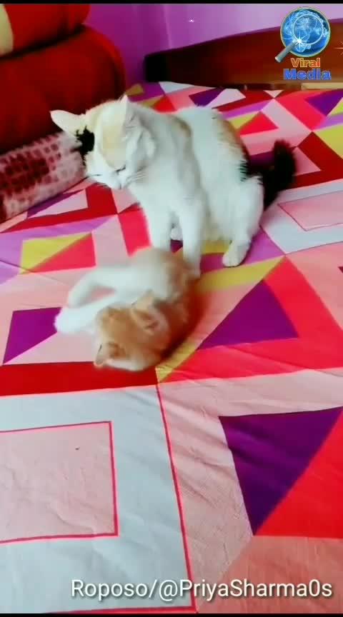 Apni mummy ko pareshan kardiya hai I isne ee #fullscreenstatus  #kitten #cats #cute