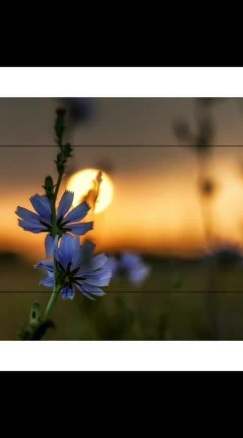 #beautiful-life #lunawada #daman #diubeach #diufort #diu_daman #damandiu #valsadvapi #valsad #vapi #vapidiaries #gunjan #in-love- #withmy #house #home