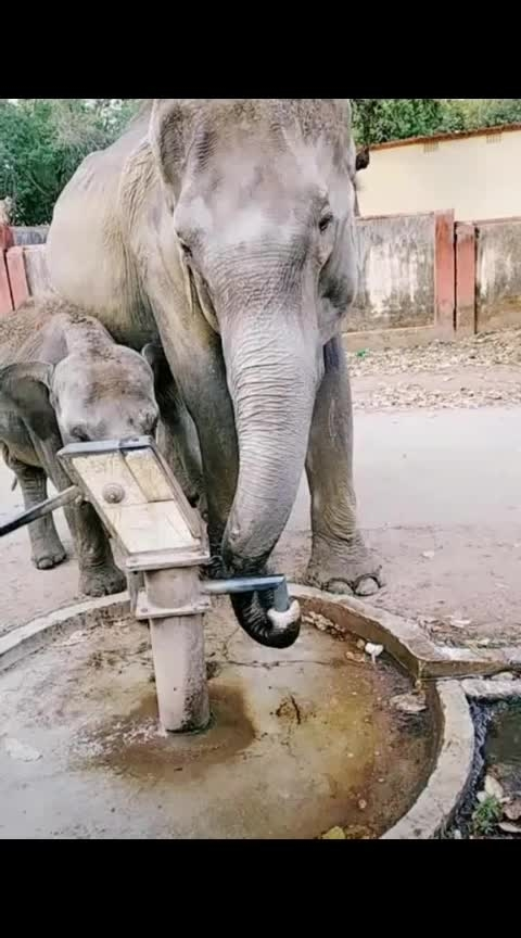 🐘🐘☀️please give me some water