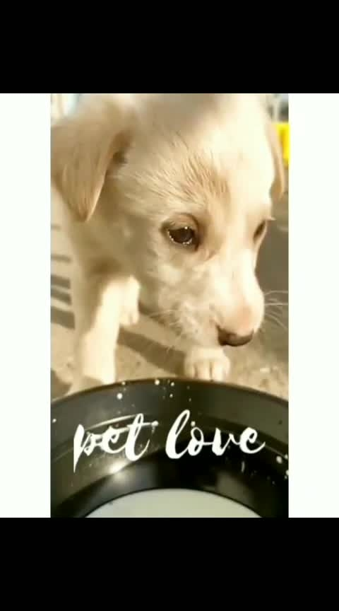 #dog   #puppy  #pup  #adorables  #photooftheday  #cute  #anime  #eyes  #dog  #animals  #pet #pet  #petsagram  #dog#dog #ilovemydog  #dog #dog #lovedogs  #hound  #love  #dog#instapuppy  #instalove