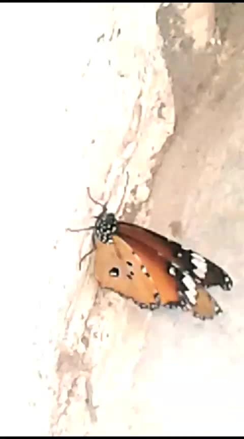 buitiful insect