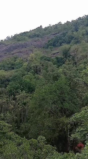 #awesome-creation #ropos #incredibleindia #forest #very-beautiful #like #risingstar #keraladiaries #നമ്മുടെ നാട് എത്ര മനോഹരം