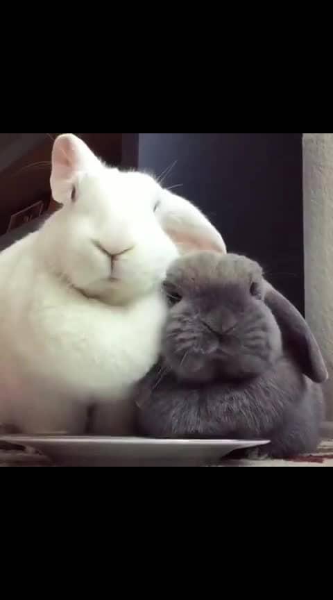 #cuteness-overloaded #roposo #roposo-cute
