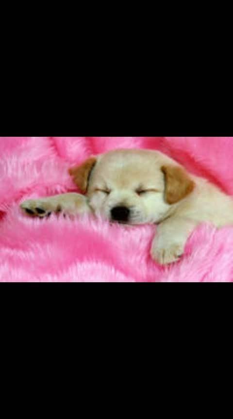 #awsomecreativity #eye #dogs #cute-hot #in-love- #sweetsmile #loveness #ropo-beauty #ropos #ropo-ropo
