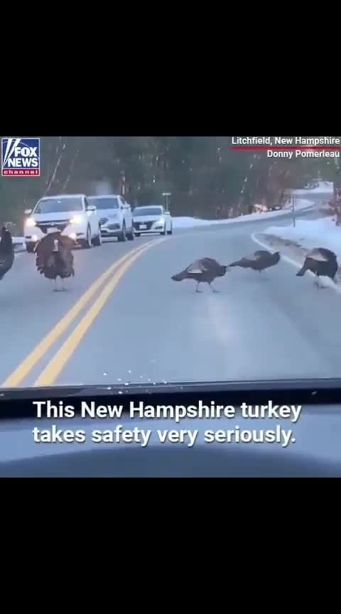 New Hampshire Turkey take safety very seriously