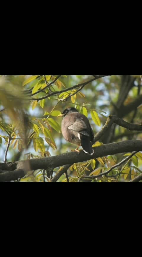 #alone #song #birds #photography #featuring #featuredvideo