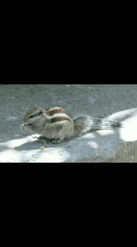 #love-photography #squirrel #action #featuring #song #alone