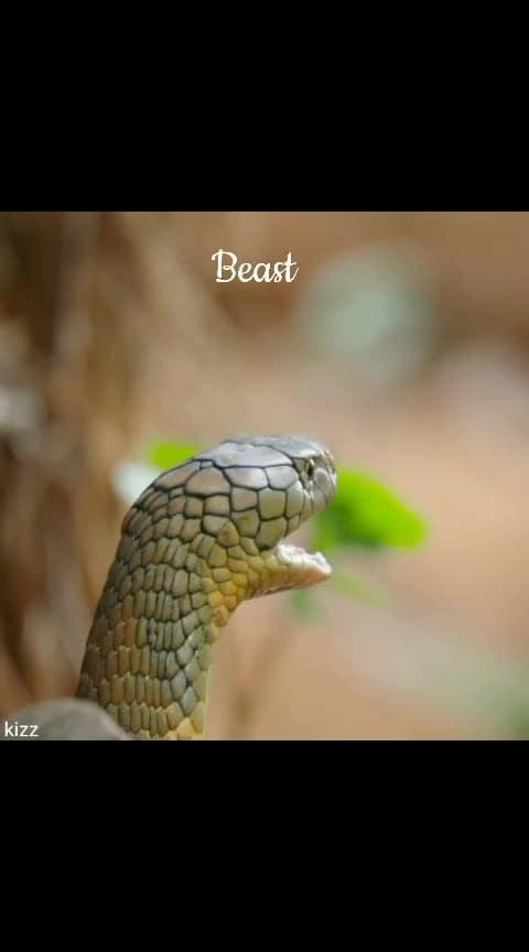 Beast 🐍#risingstaronroposo #snakes #risingstar #englishsongs #englishstatus