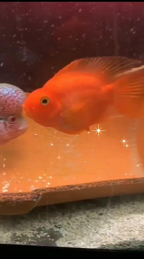 #Which one is your fav2😍😍🤔🐋🐟🐳🦈🐡🐠#flowerporn #parrotfish #aquariumfish #fishtank #homehacks #captured