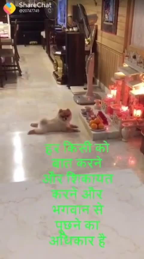 Great #worship #pets #cats #god #rights #Good #guys #filmy #scene #training #wish #prayer #listen #bhagwan #namaste #please #fulfill #my #voice #indian #cultures #serious #love #mind #all #lol #mandir #upasana