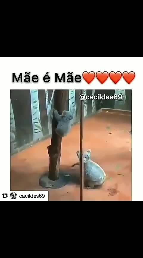 mother is always a Mother  #motherslove #animallovers #animals #wildlife #wildlifesafari #wildlifelover #wildlifephotography #panda #animallove #savenature #amazing-video #supervideos #followme #followforfollow #followmeonroposo #followformoreupdates