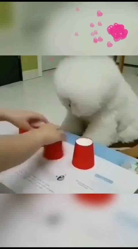 #checks the concentration!!😍😍😍🐶🐩#mindsetcreator #sugar lippies  #animallover #creation_of_nature #somethingnew #wow