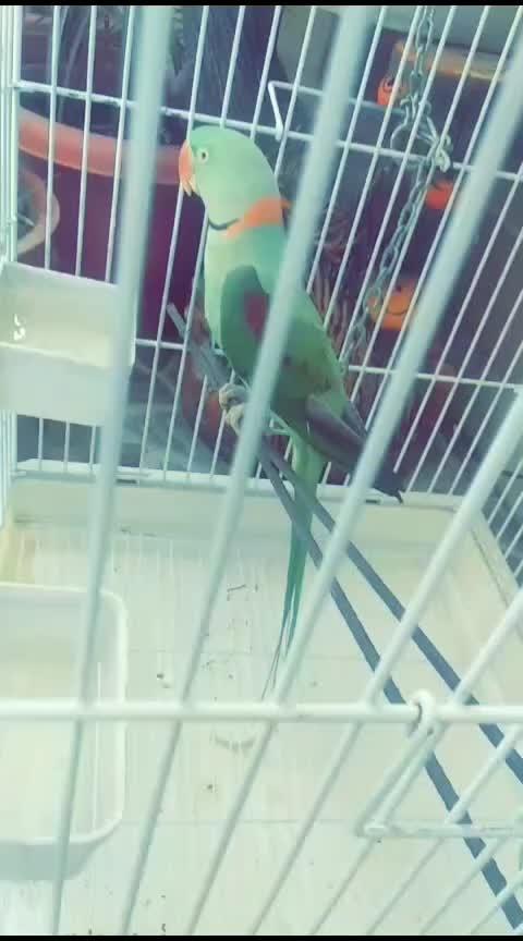 #mypets #parrots #green #love #lovingbirds