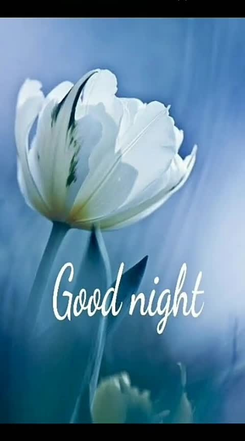 🌸gσσd níght 🌸#good--night  #good---night  #good----night  #good-night-friends  #good night.  @rajesha74b09e7  @roposocontests   #creativespace   #good-night  #partystarter  #thehappyone  #weekend  #thecomedian  #drmantic  #nature  #romantic  #super  #wow  #love  #roposo-roposostar  #roposostar  #filimistanchannel  #bfflove  #rainbow  #love-status-roposo-beat