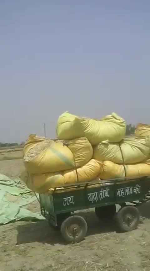 Haryana Trand