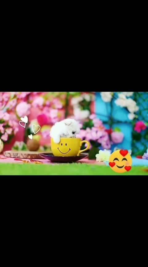 #so cute#butifull #roposolove #pantlove #animallovers