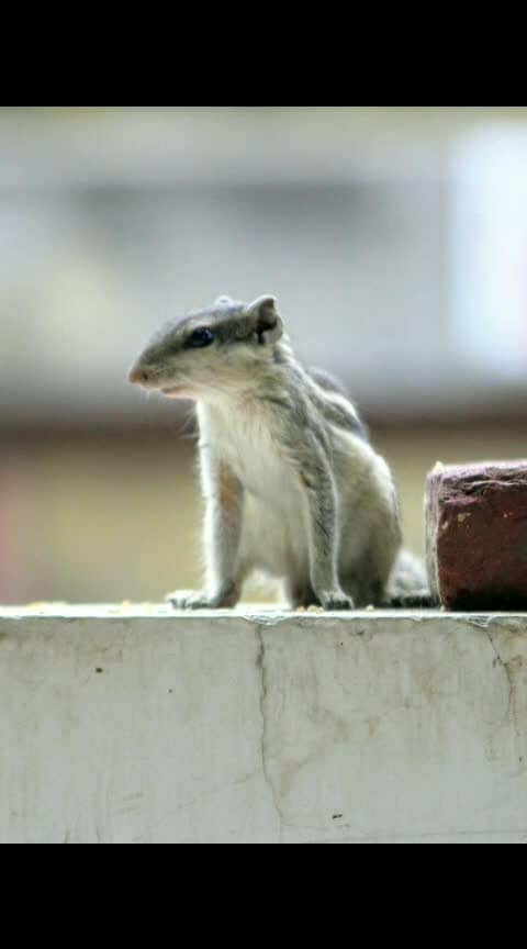 #photographyoftheday #love-photography #squirrel #song #alone #awesome-creation #animation