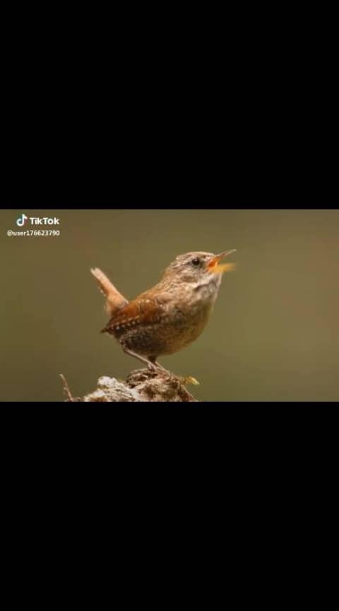 #birdsworld