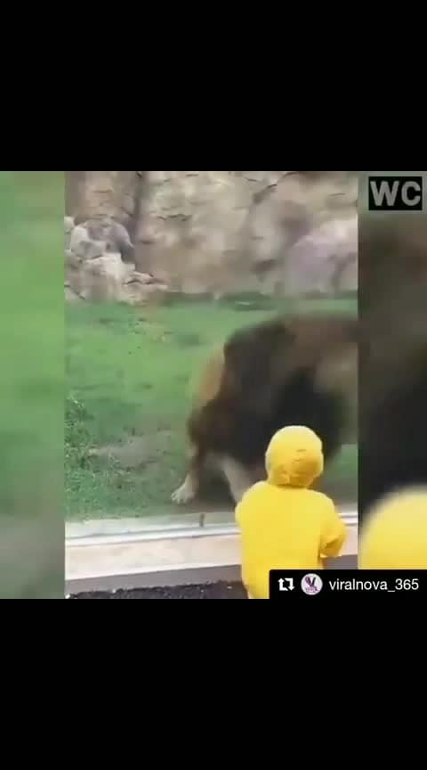 animals scaring people #people #scary #funny #roposo-good #awesome #kids #girls #animales #attack #movie #lion #eatingwell #real #new #old #work #zoo #telugu #hindi #english #whatsapp #status #instagram #facebook