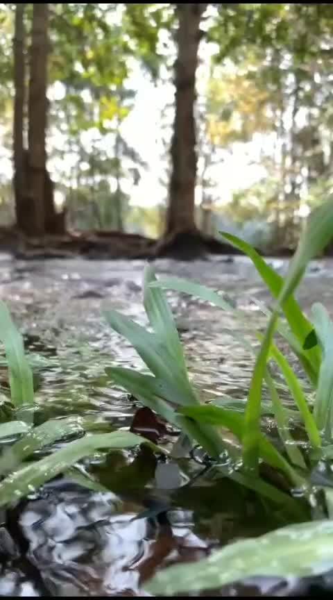 #natureslove 🥰 #gooorning-wishes