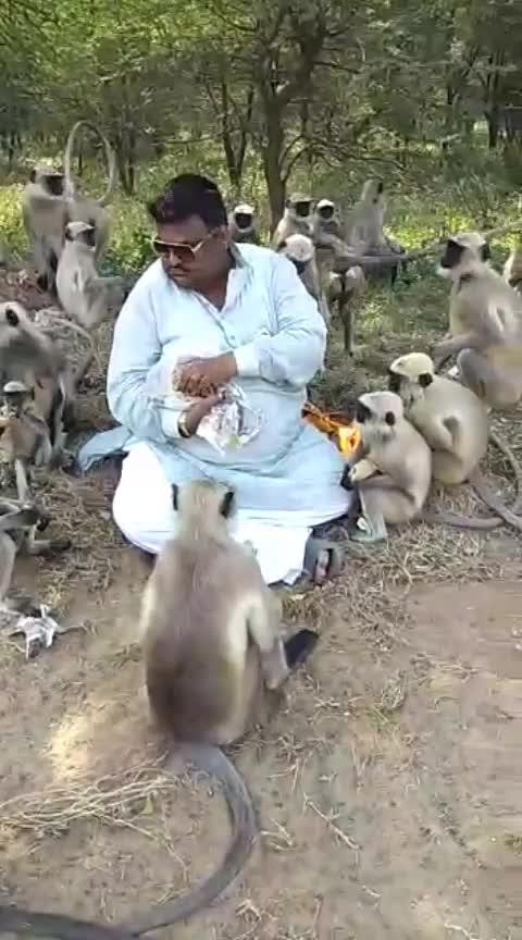 Wow #charity #apes #eating #rotis #roti #man #rajasthanI #indian #great #work #motorgadi #eating #salute #god #animal #we