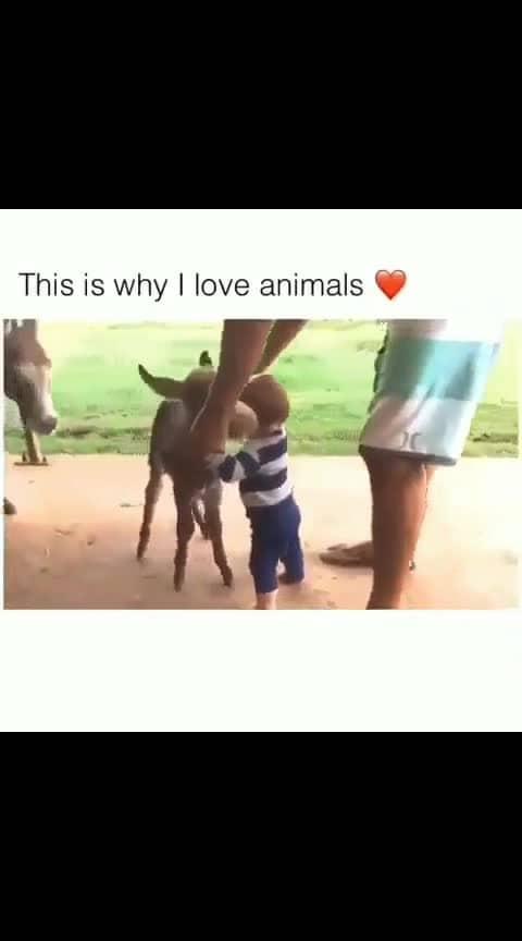#animals #loveanimals #mothernature #lovethenature #animalsarenotfood #animalsareamazing #animalsarebetterthanhumans #wow #roposo-wow #wow-nice-view #followme #followformore #followformore #followroposo #featurethisvideo