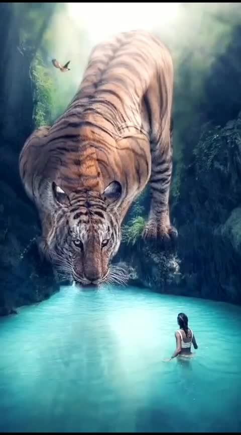 #tigers  #zeotrophic