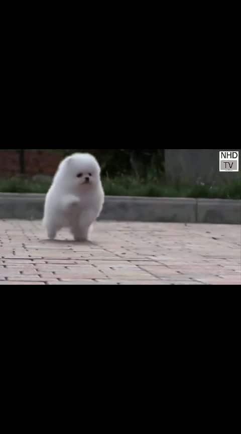 #puppies #puppylove #puppy #dog #wow #socute #socuteeee