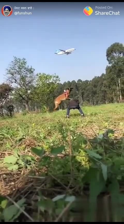 #stunts #dogs #impossible