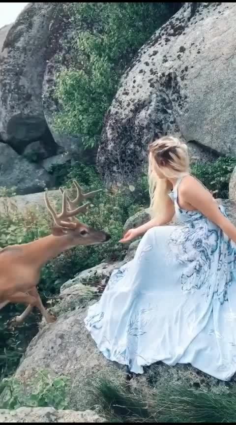 #capture  #naturelover  #deer