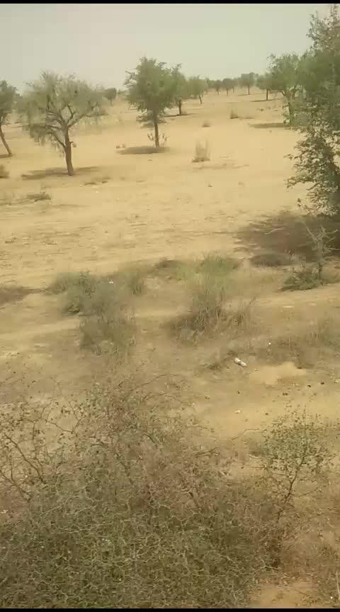 Heavenly desert