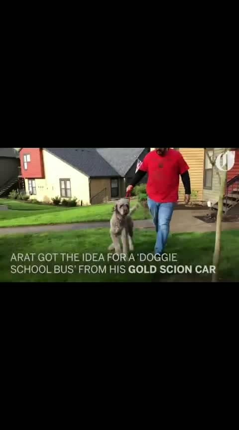 doggie school bus