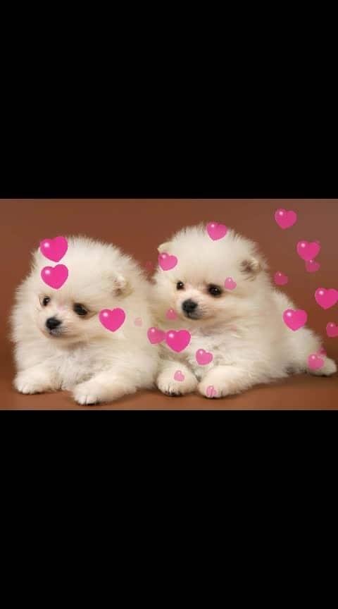 #awsomepic #cute-hot #ropos #roposodance #ny #dogs #puppylove #ropo-beauty #bold-is-beautiful #beautifulfingerring #love #loveness #cuteness- #lajawab
