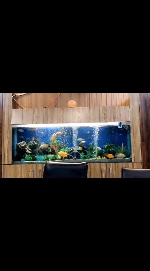 my decorated aquarium